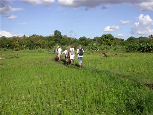 Gennem rismarkerne ad små stier
