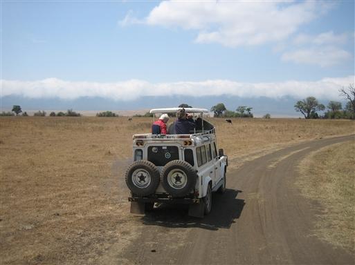 På udkig efter dyr, safari på Serengeti-sletten