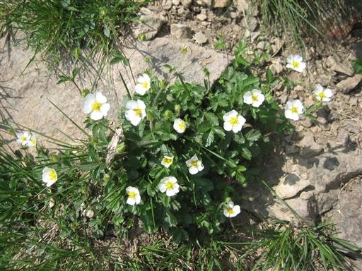 Selvom naturen mange steder kan være barsk findes der smukke blomster