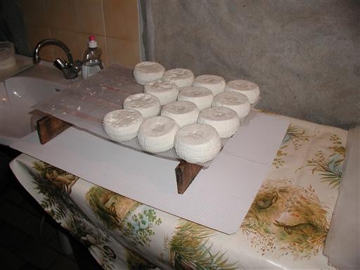 Vi får også forklaret lidt om osteproduktionen, før der skal smages på oste med forskellig modningsalder