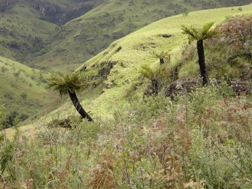Drakensberg er meget frodigt