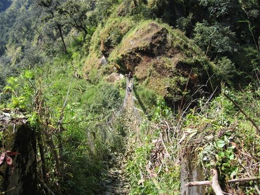 De første vandredage foregår i meget frodige omgivelser - selv hængebroerne vokser næsten til