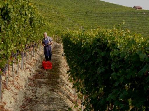 Luciano i højt humør blandt de nu verdens berømte vinmarker