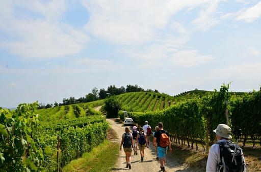 På tur i vinmarkerne