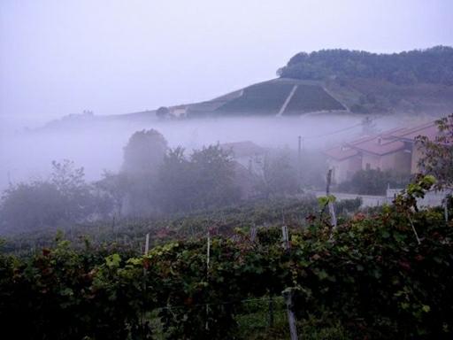 "Tågen kaldet ""nebbio"" på italiensk har givet navn til Piemontes store drue nebbiolo"