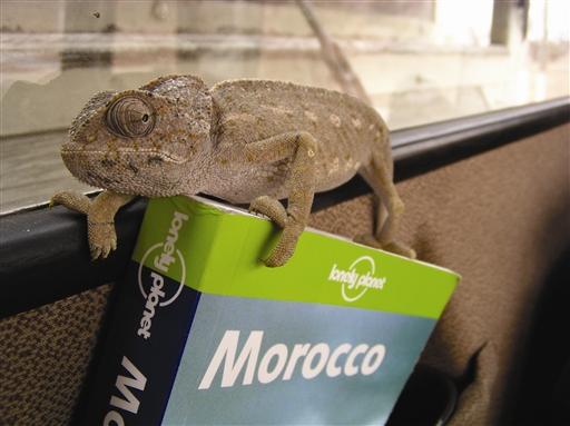 Guidebogen benyttes flittigt - Marokko