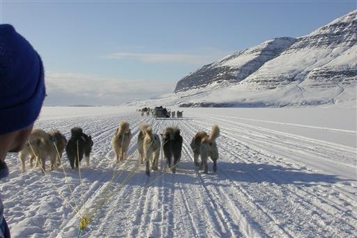 Hundeslæde på Diskoøen - Grønland
