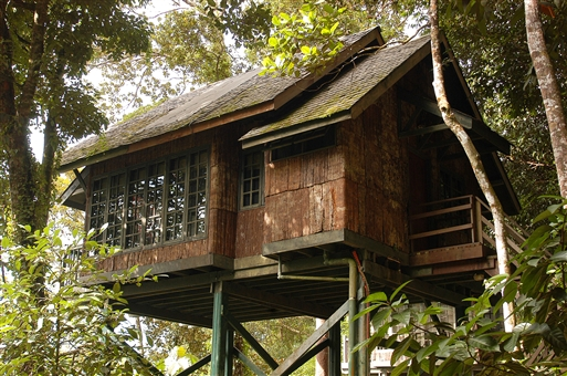 Treehouse - Borneo