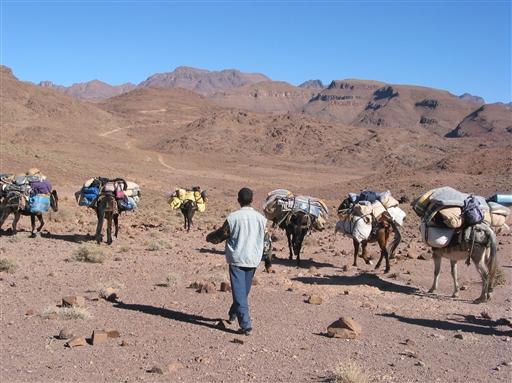 Vores muldyr pakkes hver morgen og passerer os ofte undervejs på dagens vandring.