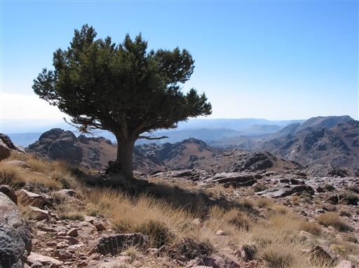 Et ensomt træ...men hvilken udsigt! Vi er på vej mod Jebel Amlal.