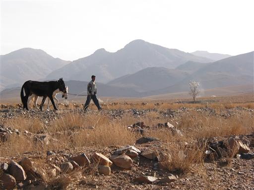 En dreng spadserer forbi os med sine to mulddyr.