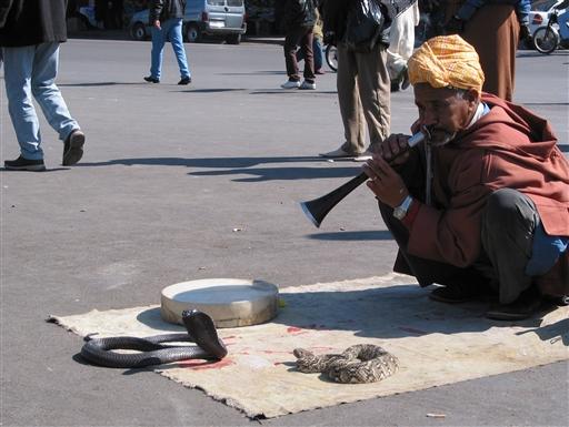Tilbage i Marrakech viser en slangetæmmer sine evner.