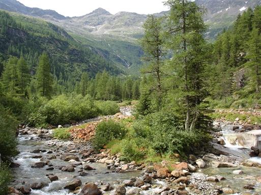 Frodig vegetation nede i dalen
