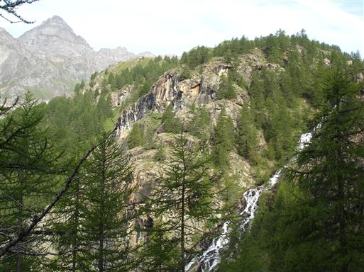 Lærkeskov ved Verax dalen