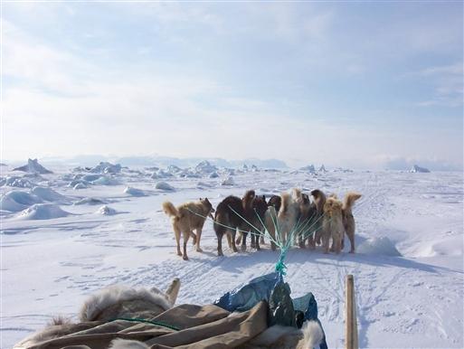 De isbelagte fjorde er hundeslædernes motorvej