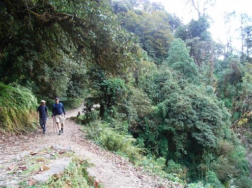Rhododendrunskoven under Ghorepani