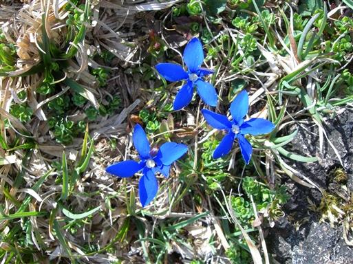 Foråret byder på masser af vilde blomster i bjergene.