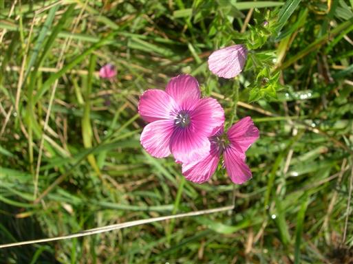 Og langt hen på efteråret vil man stadig opleve blomster, som pynter i landskabet.