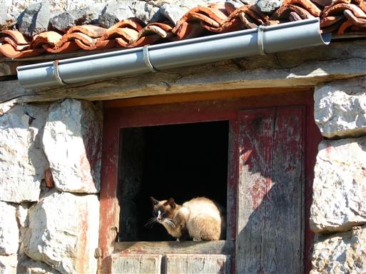 Selv katten nyder en solrig plet i Picos bjergene.