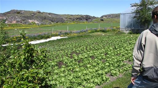 Upernaviarsuk landbrugsskole og forsøgscenter