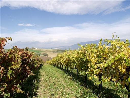 Den umbriske vin på Sagrantello druen er i høj klasse.
