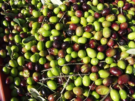 Flotte! De grønne er ikke helt modne, men gode som spisebær.
