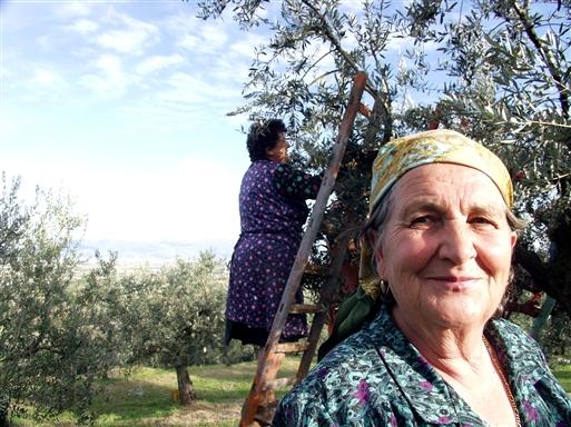 Smukke ældre damer deltager i arbejdet.