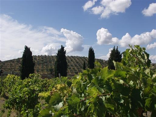 Oliven og vin i et intensivt vekselbrug