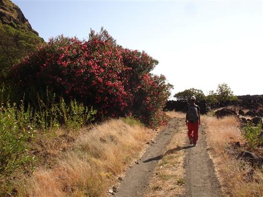 På vej til Mosteiros.