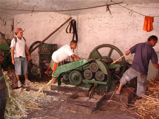 Presning af sukkerrør.