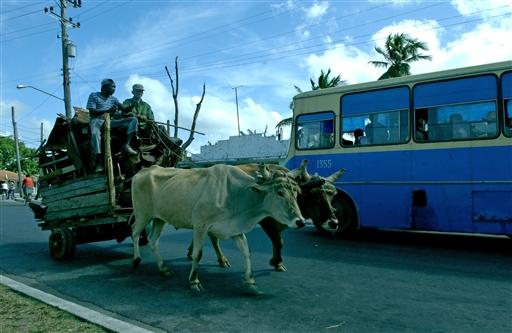 Oksekærre er stadig et almindeligt transportmiddel.
