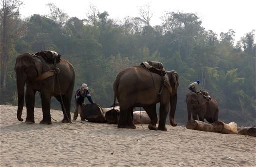 Og lige pludselig opdagede vi en flok arbejdselefanter ved Mekongbredden.