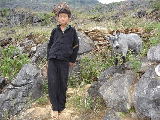 Gedehyrde fra White Hmong minoriteten