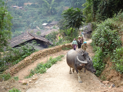 Nordvietnams svar på Massey Ferguson - vandbøffel!