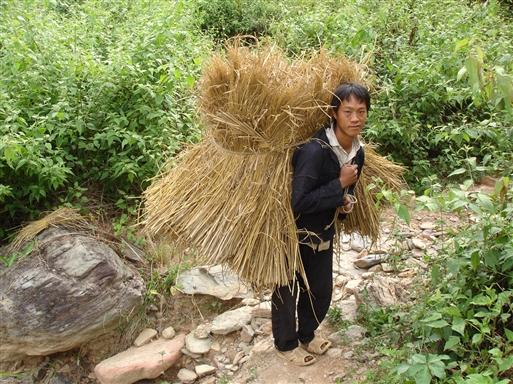 Livet på landet i Vietnam er hårdt arbejde!