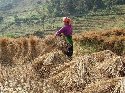 Binding af risneg