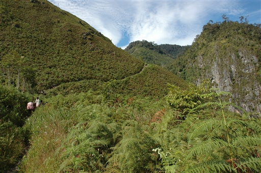 Carstensz flora