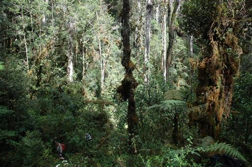 Trekking i junglen