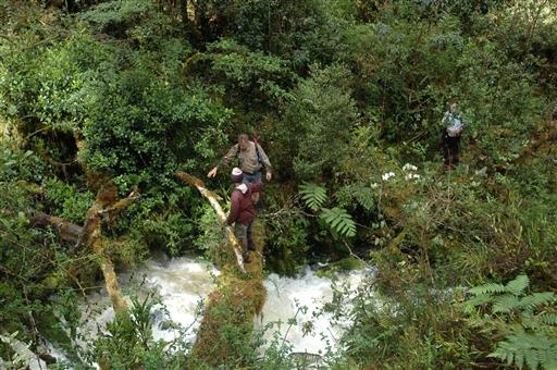 Vores hjælpsomme lokalguider fører os sikkert gennem junglen