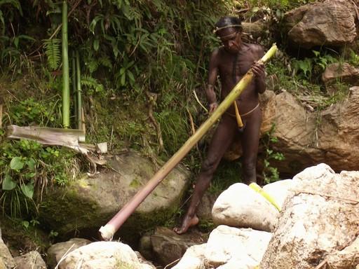 Bambussen er en vigtig næringskilde for de indfødte