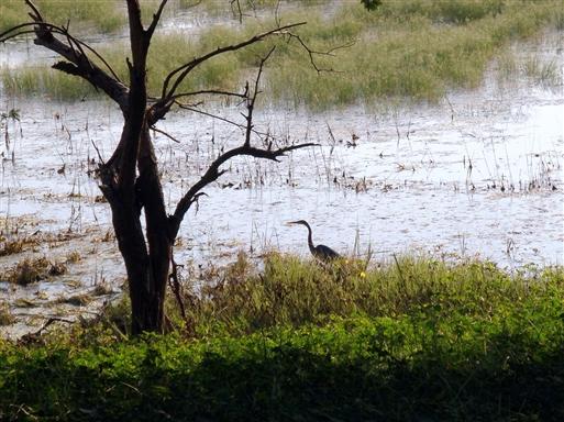 Fuglelivet er rigt i Ranthambore.