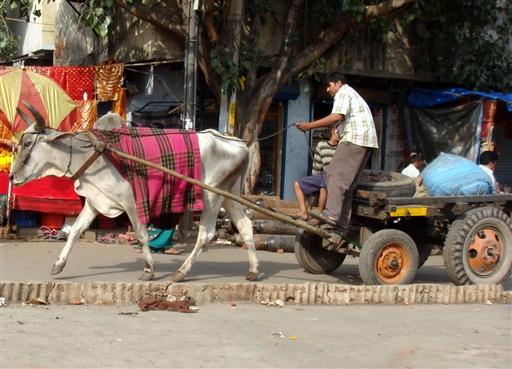 Oksekærrer er almindelige i gadebilledet.