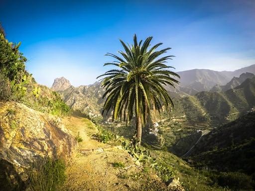 Daddelpalmer er med til at give vandreturen et eksotisk præg