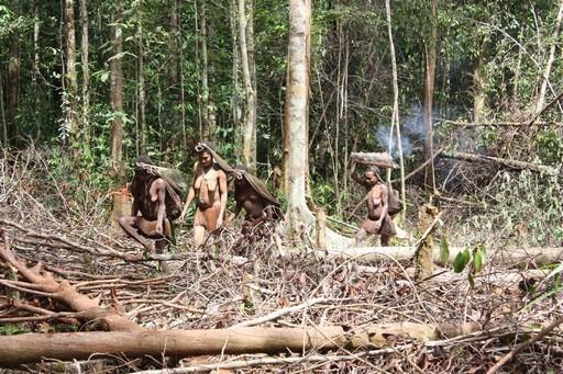 Korowai er j�gere og samlere, og kvinderne g�r sj�ldent nogle steder uden at medbringe deres net
