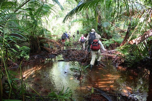 På trek fra Mabul til Manopteropo gennem smuk regnskov
