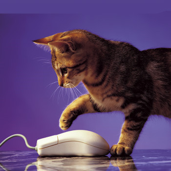 Fellowes Mouse pad Optical, Cat & Mouse