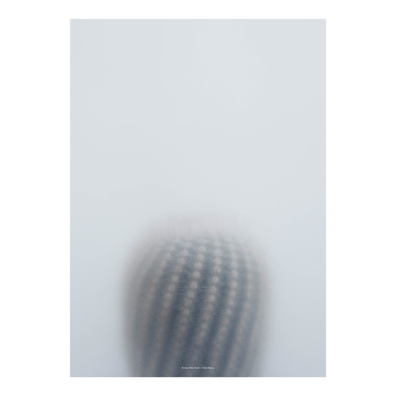 Kristina Dam Ball Cactus I Plakat – pris 400.00