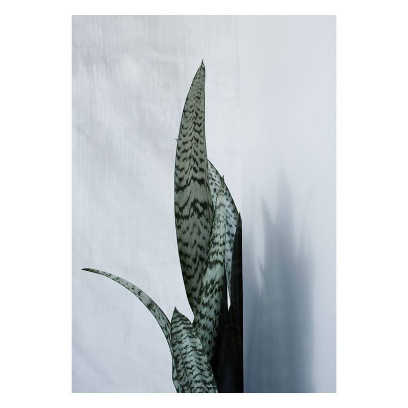 Kristina Dam Bayonet Plant I Plakat – pris 600.00
