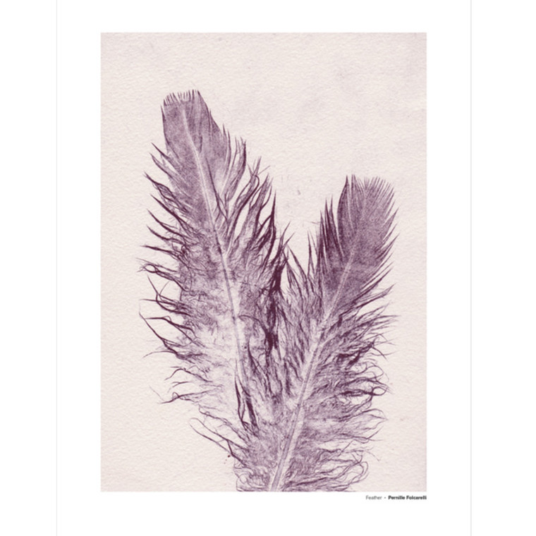 Pernille Folcarelli Feather 4 Illustration m. Ramme