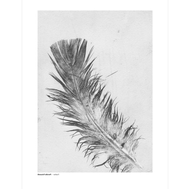 Pernille Folcarelli Feather 6 Illustration m. Ramme